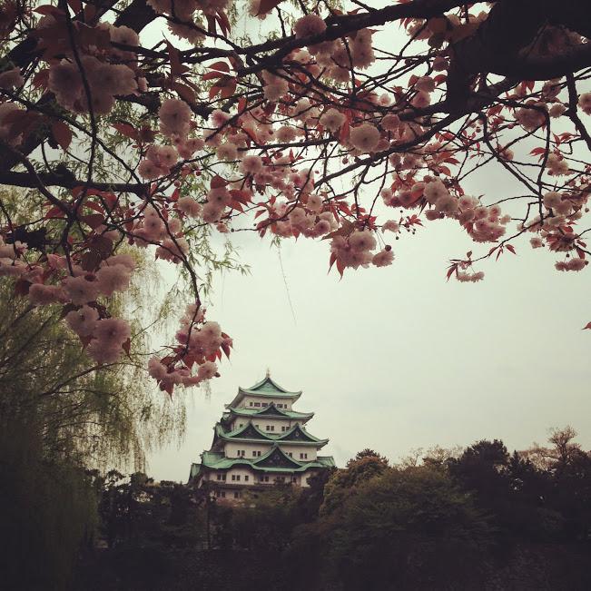 名古屋城×桜